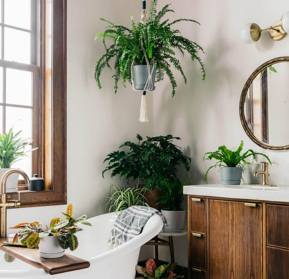 Plantas no banheiro? Veja como incluir o verde no cômodo