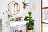 plantas-cada-ambiente-thumb