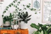plantinhas-espaços-pequenos-prudence-earl-unsplash