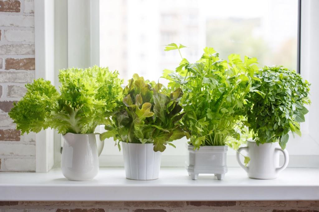 Vasinhos pequenos em porcelana branca alinhados em parapeito de janela. Ervas dentro