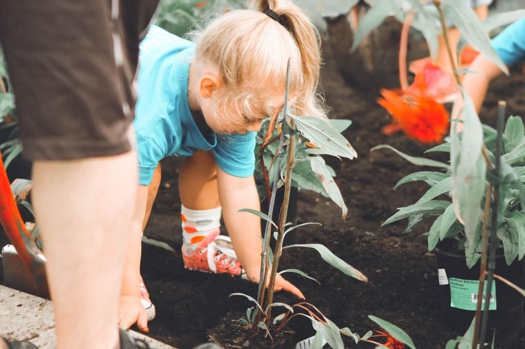7-plantas-seguras-para-criancas-casa.com