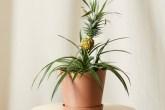 Plantas Seguras para as crianças