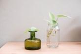 8 plantas que você pode cultivar na água