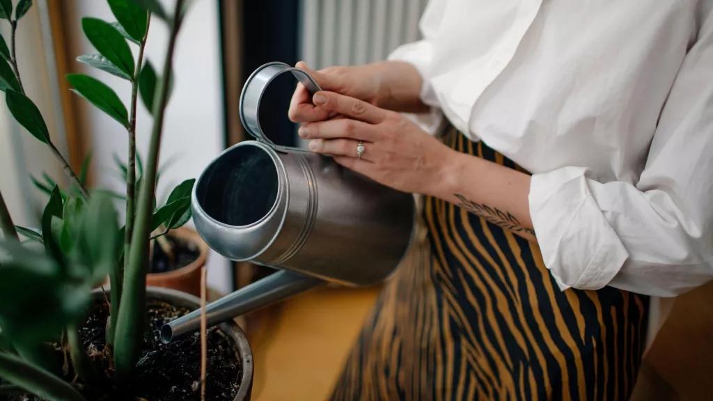 O quê Dá para regar plantas com café 01 Vision Art NEWS