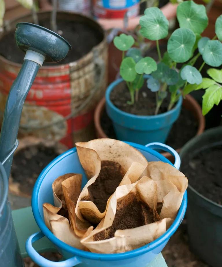 O quê Dá para regar plantas com café 02 Vision Art NEWS