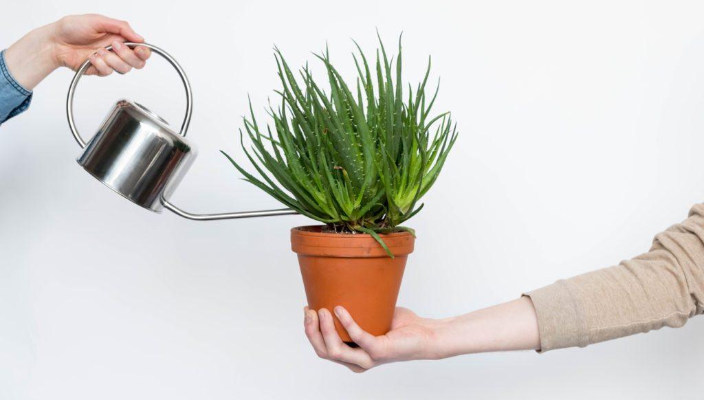 Uma mão segurando um vaso de barro com uma planta. Outra mão rega a planta com vaso prateado