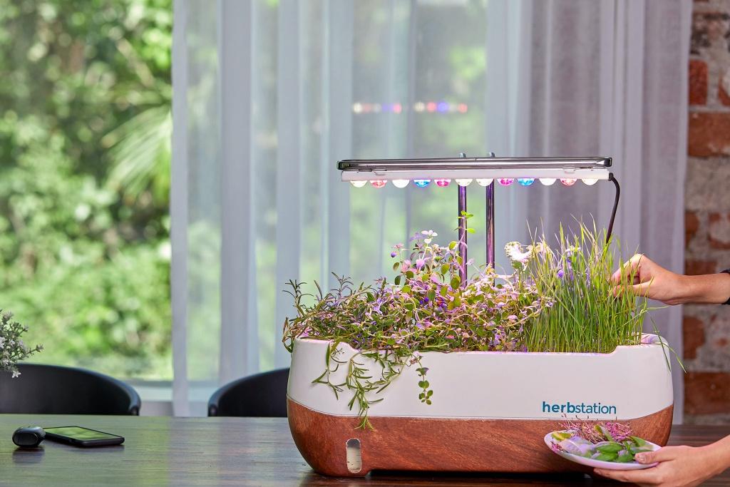 Vaso com microverdes em mesa. Lâmpada colorida oferecendo iluminação