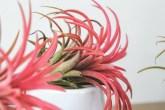 qual-planta-combina-com-a-sua-personalidade-casa.com-5-bromelia