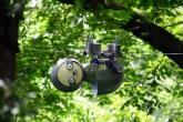 Fofo e ecológico: este robô preguiça ajuda na conservação de florestas