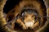 salvem-as-abelhinhas-serie-de-fotos-casa.com-1