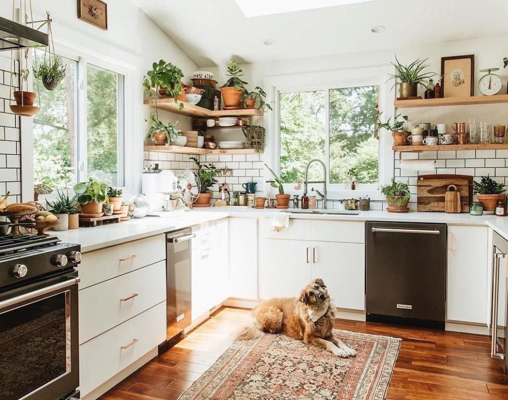 Cozinha com armários pretos e brancos. Prateleiras em madeira com plantas. Cãozinho deitado no tapete do chão