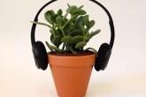 spotify-lanca-playlist-para-plantas-casa.com-1