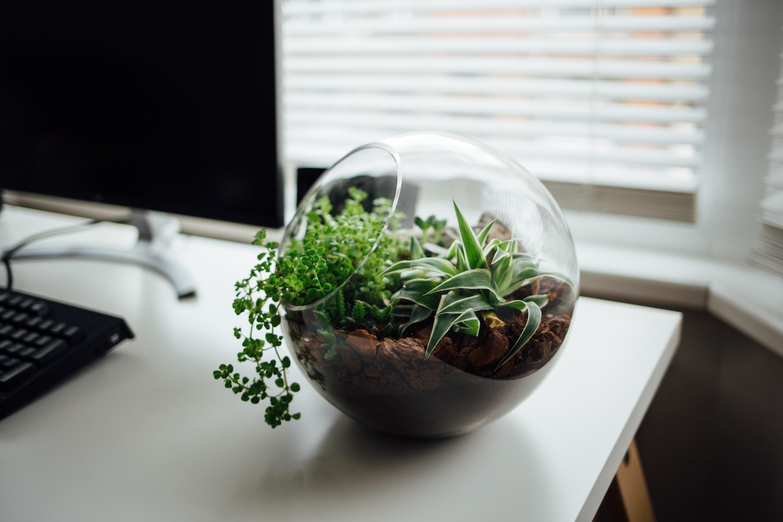 Terrário de plantas de vidro sobre mesa de escritório