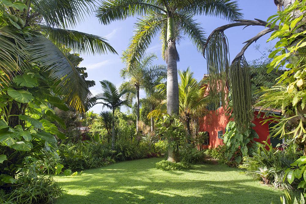 Jardim com gramado, palmeiras e folhagens. Casa vermelha entre as árvores