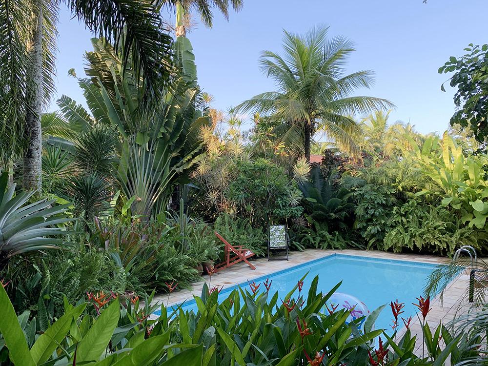 Vista da piscina entre as palmeiras