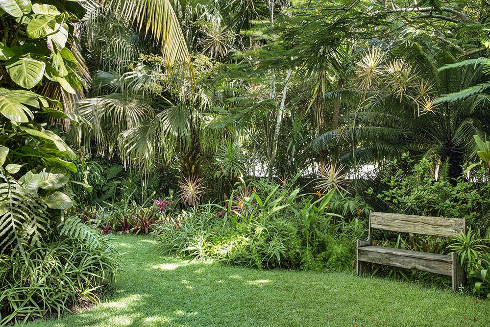 Jardim exuberante com muitas árvores e folhagens densas. Pequeno banco em madeira no canto direito