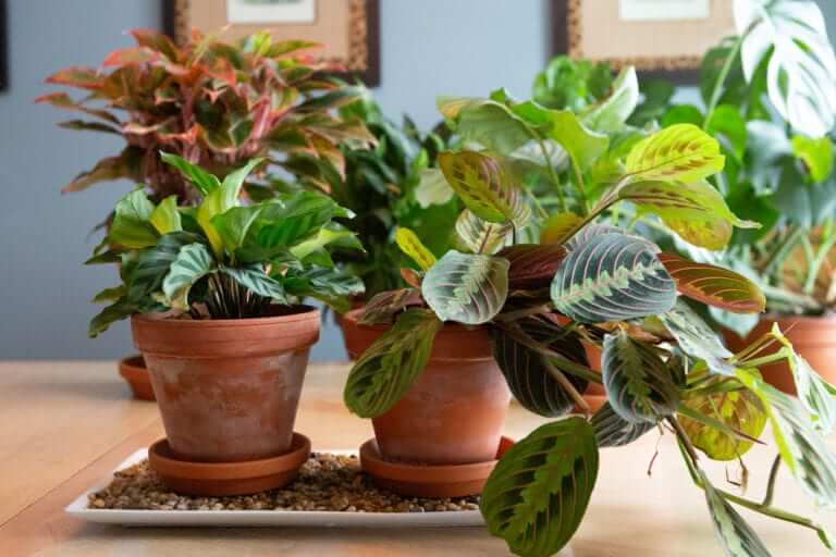 Como cuidar das plantas enquanto viaja