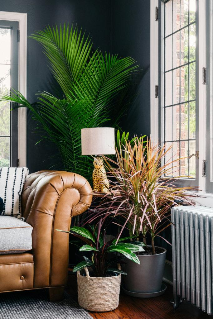 Canto da sala de estar ao lado do sofá, com plantas de diversos tamanhos e cores