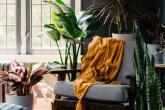 plantas-para-sala-de-estar-casa.com-2-bloomscape