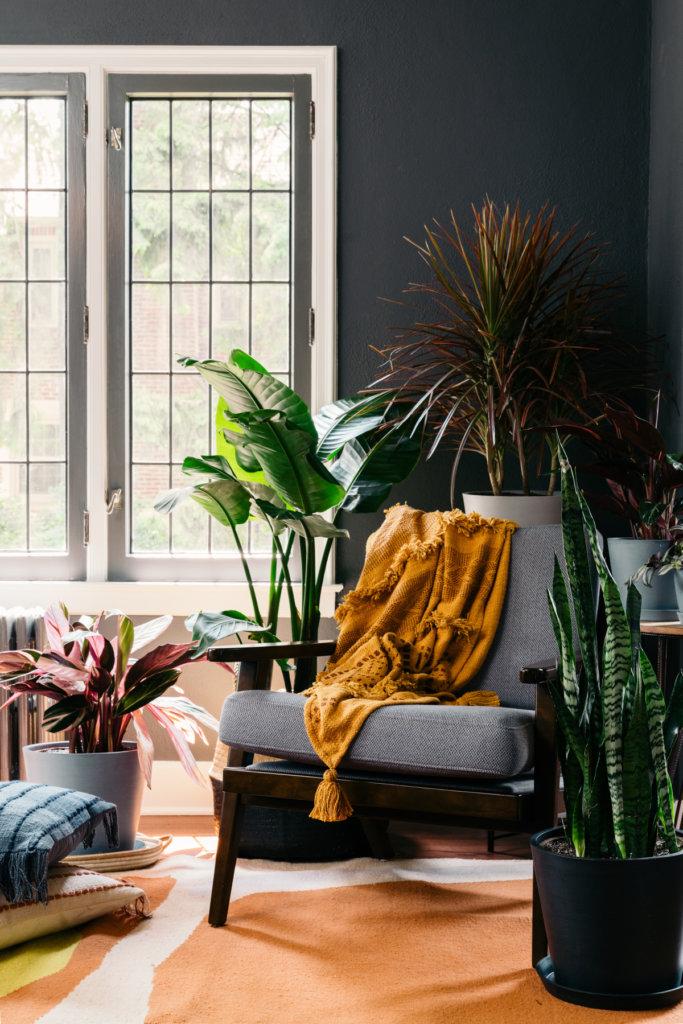 Canto da sala de estar com poltrona, envolta por plantas de diversos tamanhos e cores