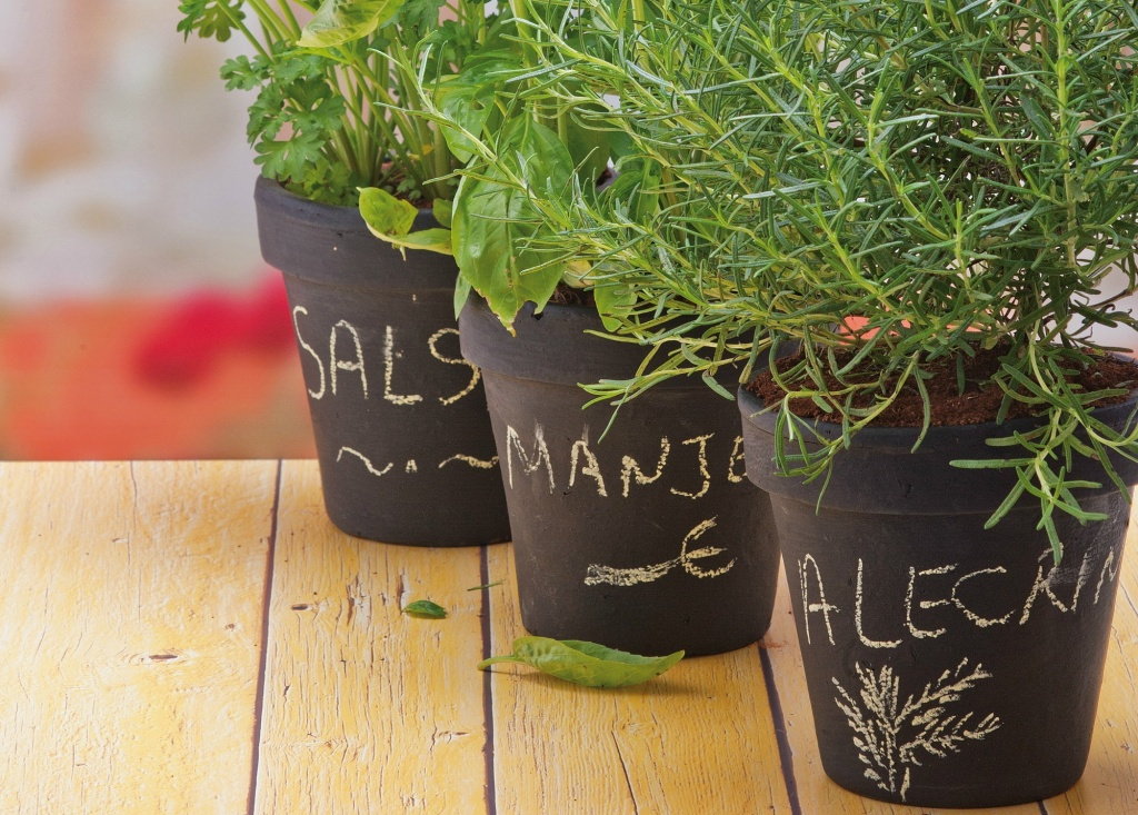 Vaso de planta decorado com tinta de lousa e nome da planta escrito com giz