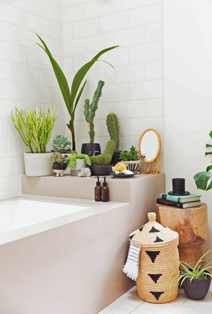 plantas para atrair boas energias para casa