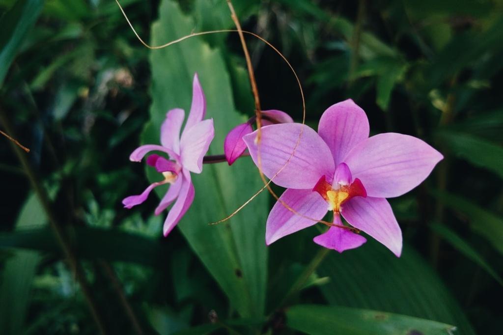 como cuidar de orquídea