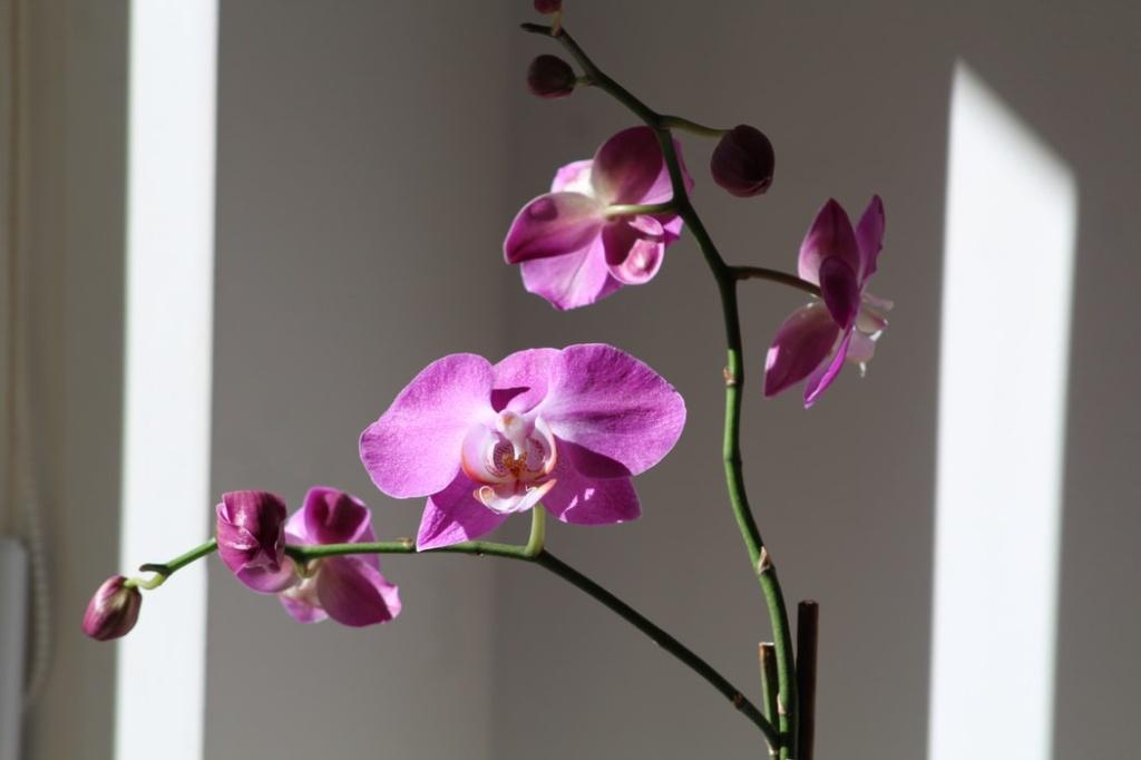 Orquídeas em casa e apartamento