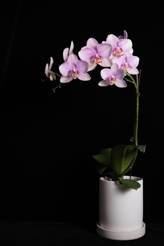 vaso para orquidea em apartamento