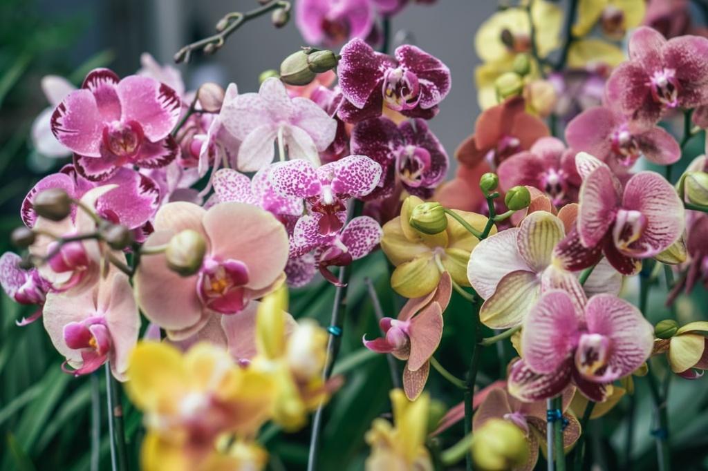 Orquídea em apartamento