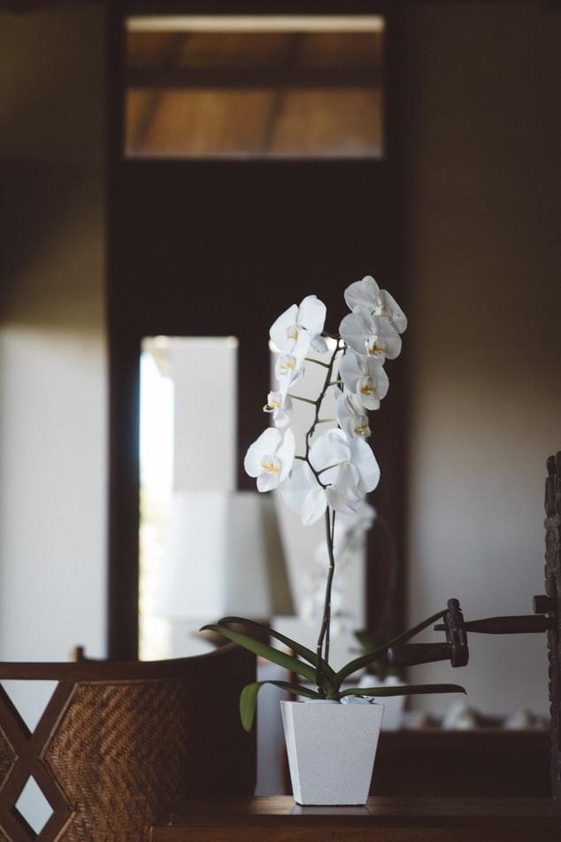 Iluminação para orquídeas