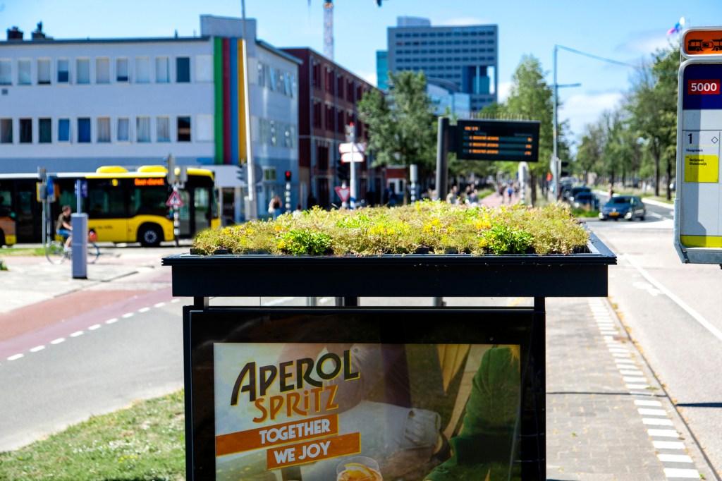 Cobertura verde em ponto de ônibus