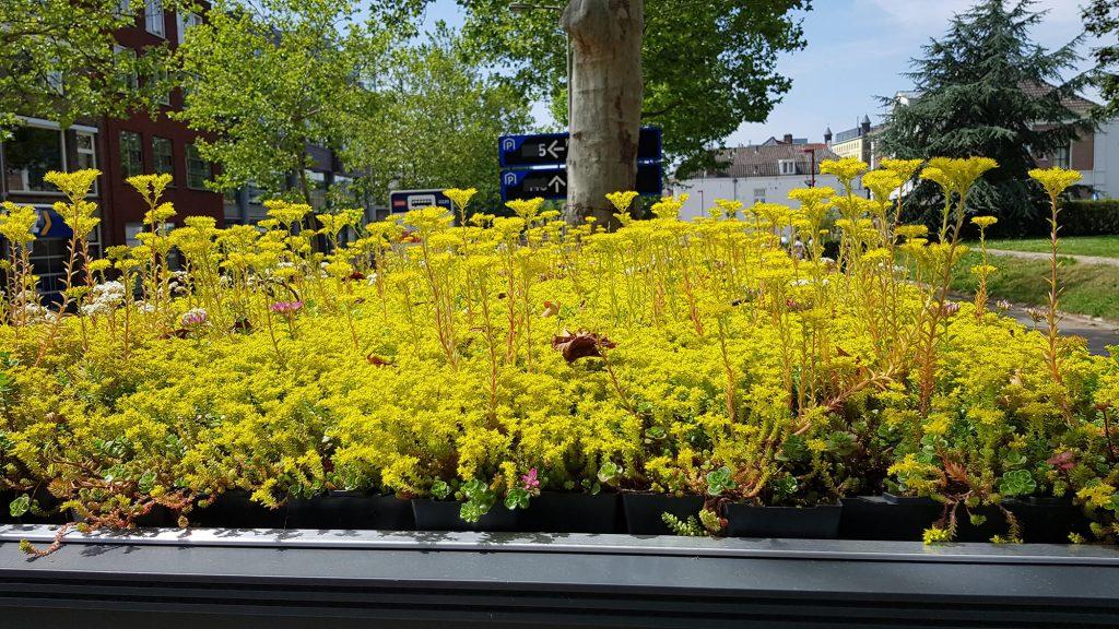 Detalhe das pequenas plantas, gramíneas e pequenas flores amarelas em cobertura de ponto de ônibus