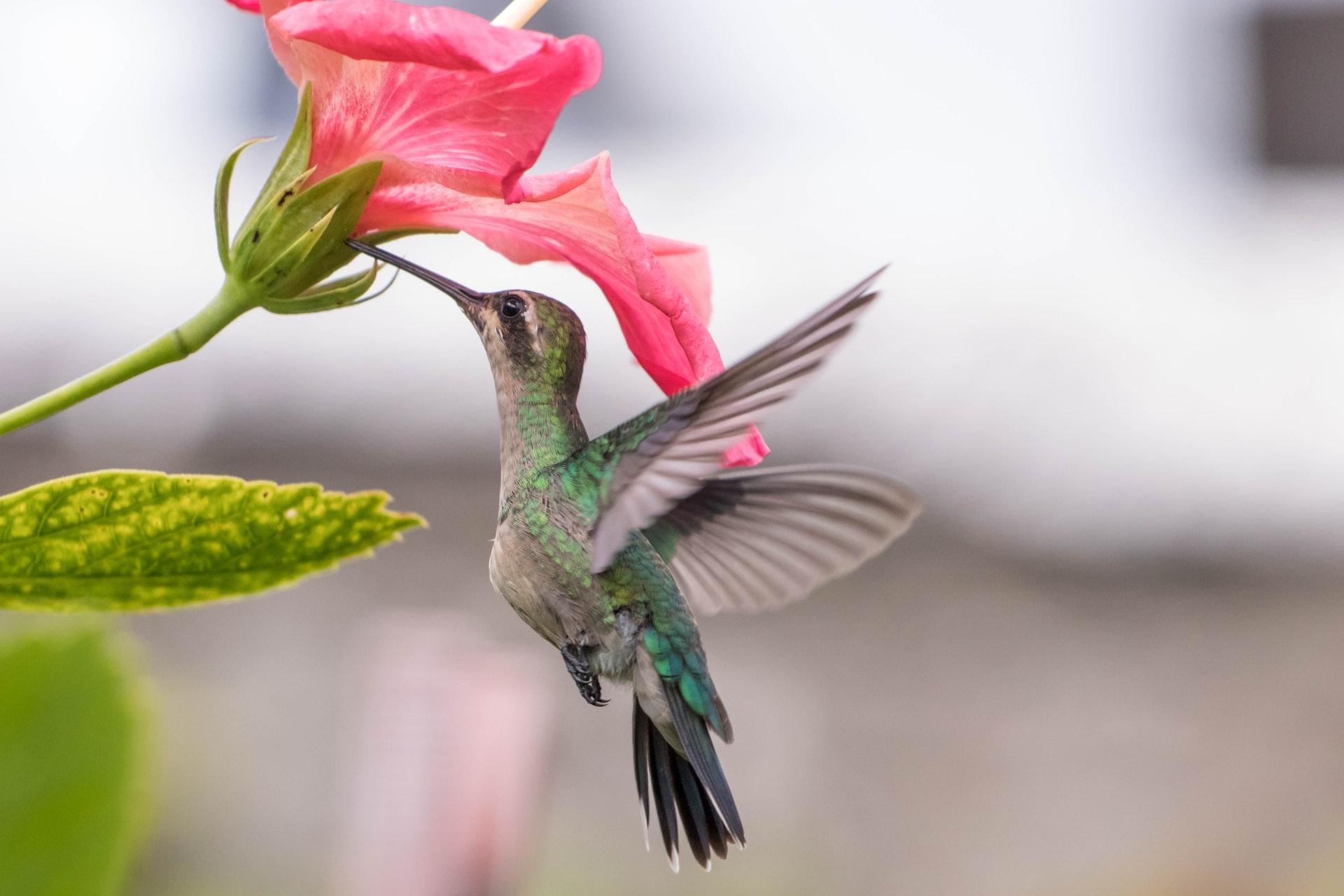 10 flores que vão trazer beija-flores para seu jardim