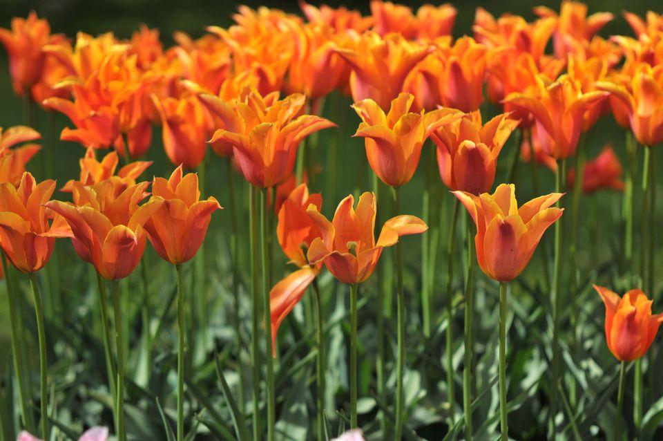 30 flores alaranjadas para esquentar seu coração
