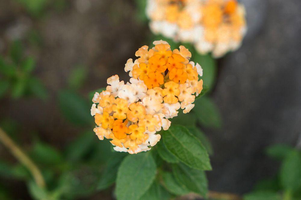 30 flores alaranjadas para esquentar seu coração thespruce 02 Vision Art NEWS