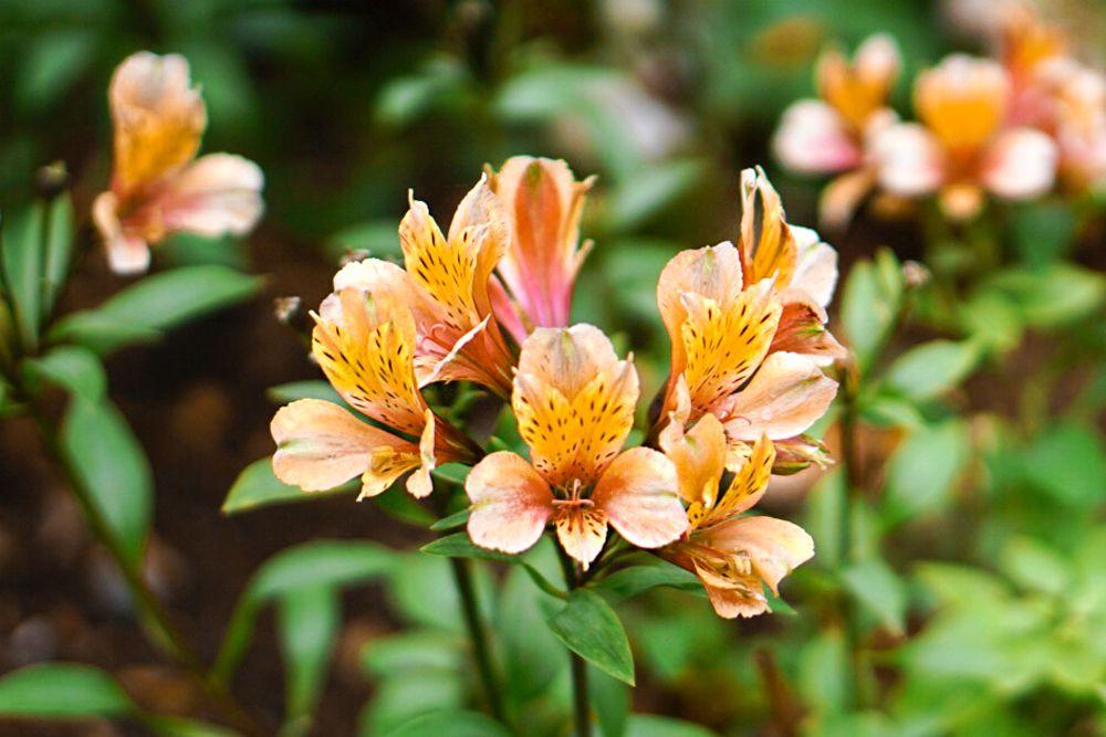 30 flores alaranjadas para esquentar seu coração thespruce 03 Vision Art NEWS