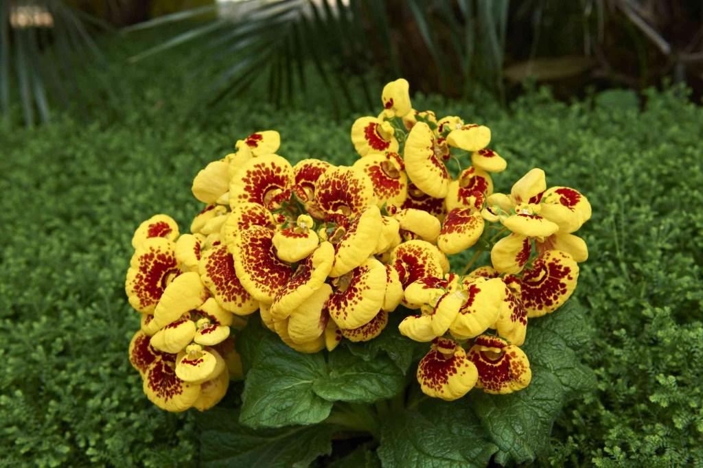 30 flores alaranjadas para esquentar seu coração thespruce 04 Vision Art NEWS