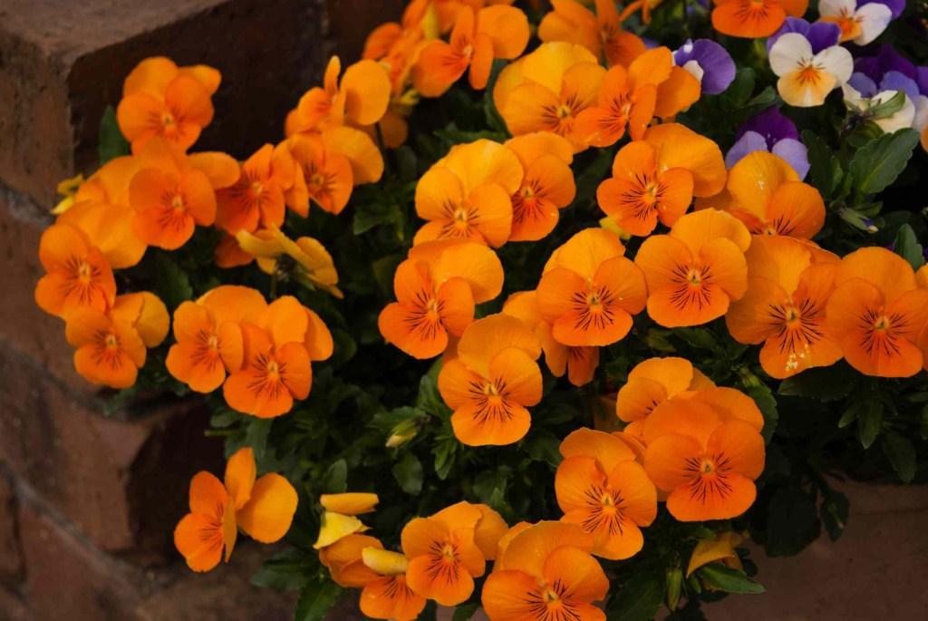 30 flores alaranjadas para esquentar seu coração thespruce 05 Vision Art NEWS