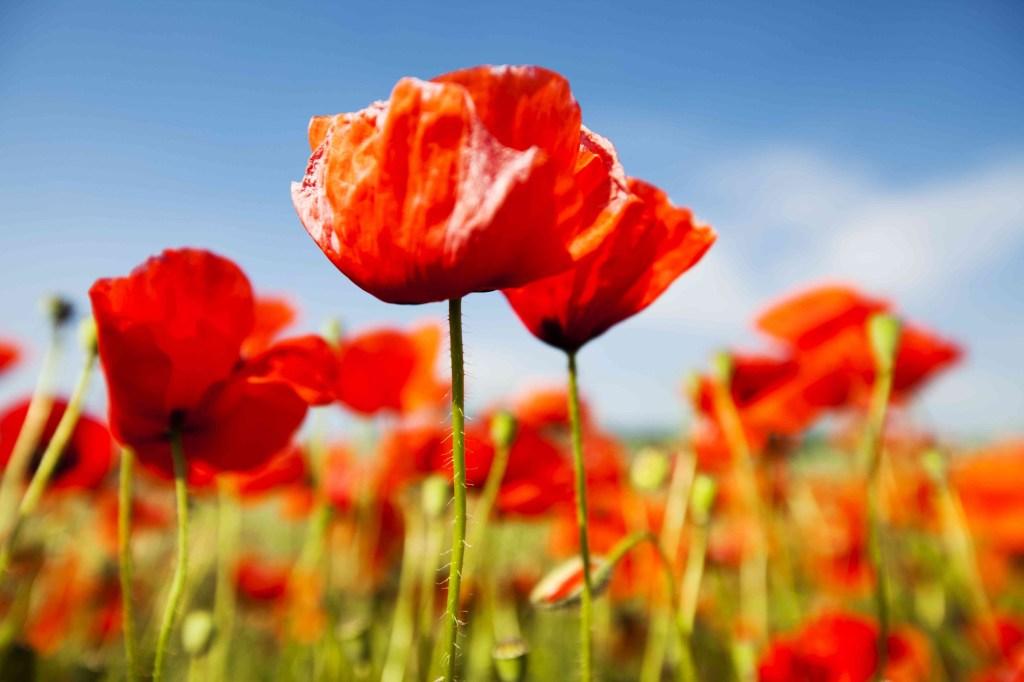 30 flores alaranjadas para esquentar seu coração thespruce 10 Vision Art NEWS