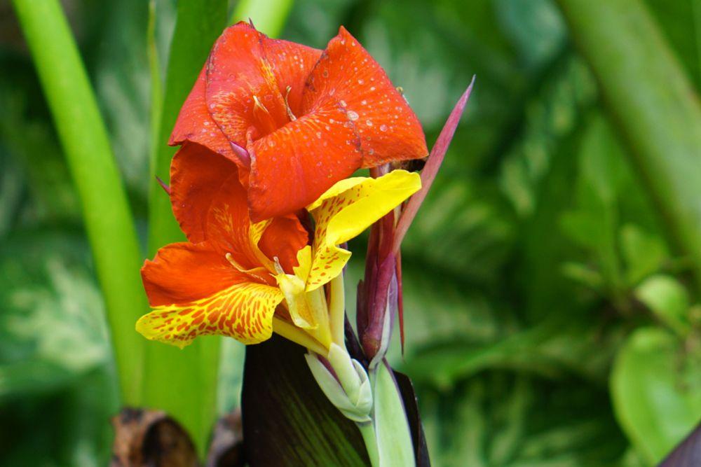 30 flores alaranjadas para esquentar seu coração thespruce 13 Vision Art NEWS