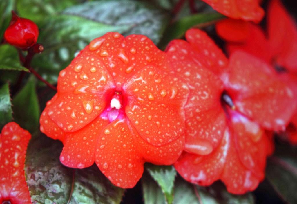 30 flores alaranjadas para esquentar seu coração thespruce 16 Vision Art NEWS