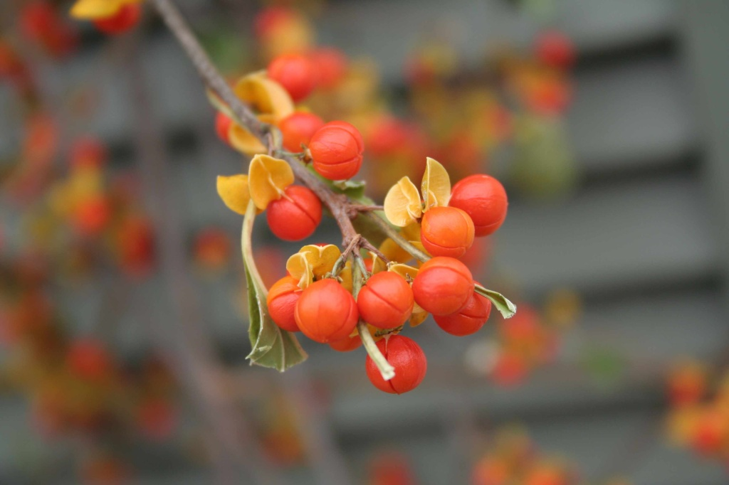 30 flores alaranjadas para esquentar seu coração thespruce 18 Vision Art NEWS