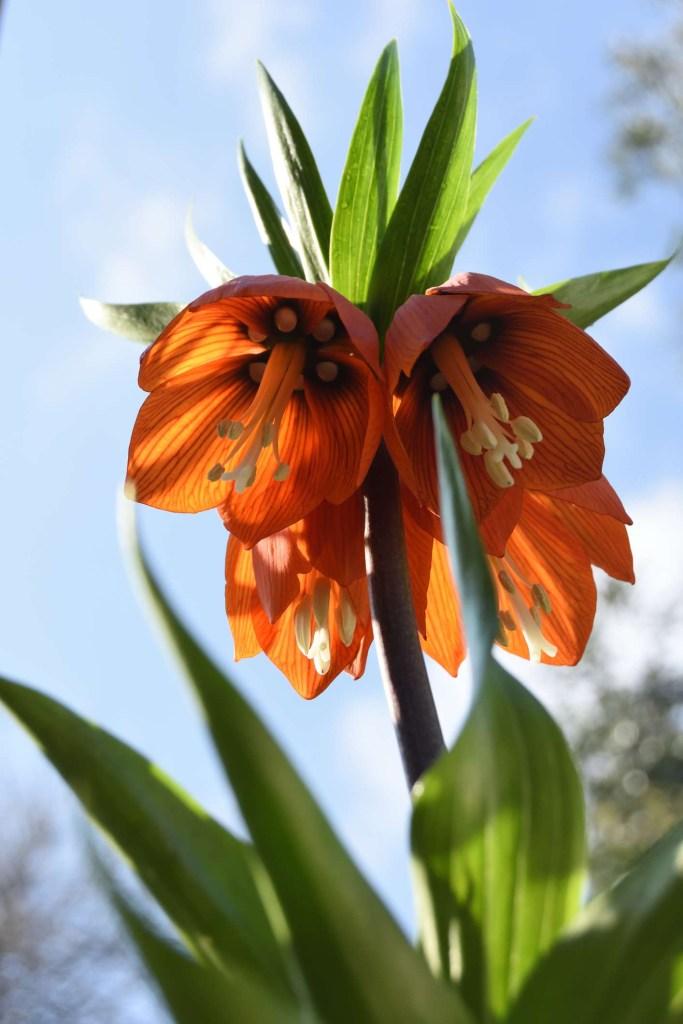 30 flores alaranjadas para esquentar seu coração thespruce 20 Vision Art NEWS