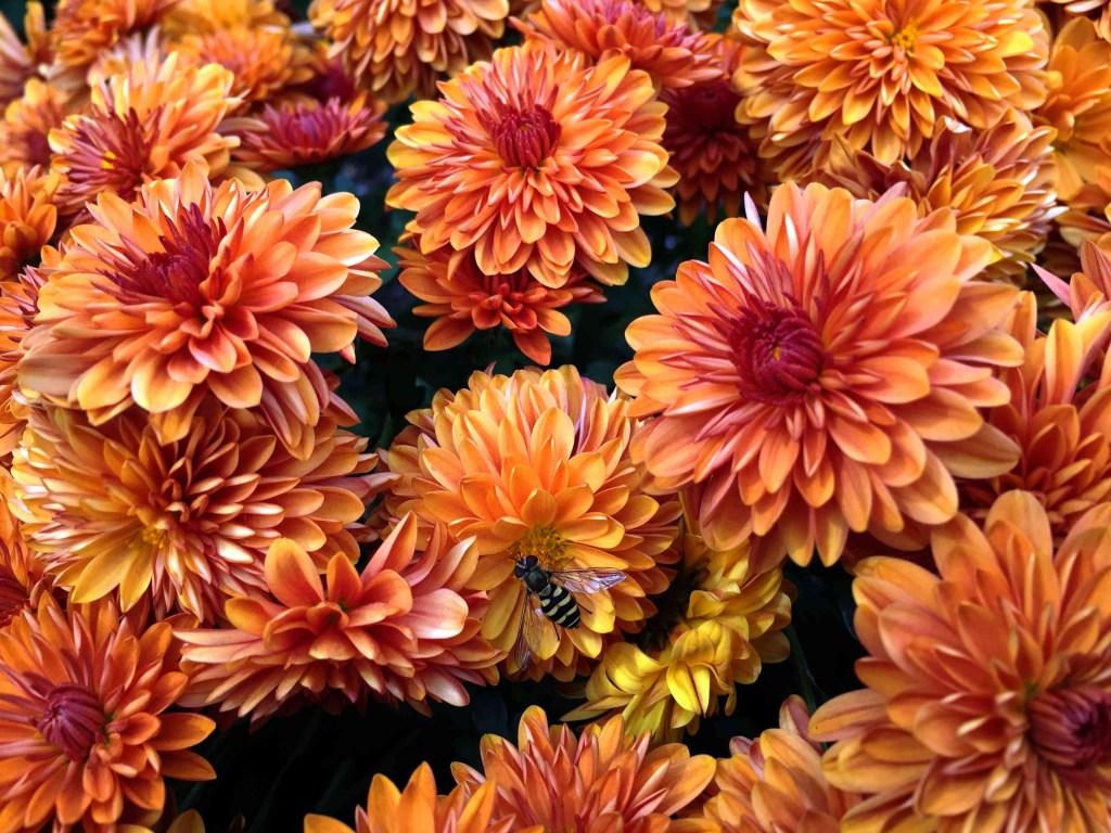 30 flores alaranjadas para esquentar seu coração thespruce 25 Vision Art NEWS