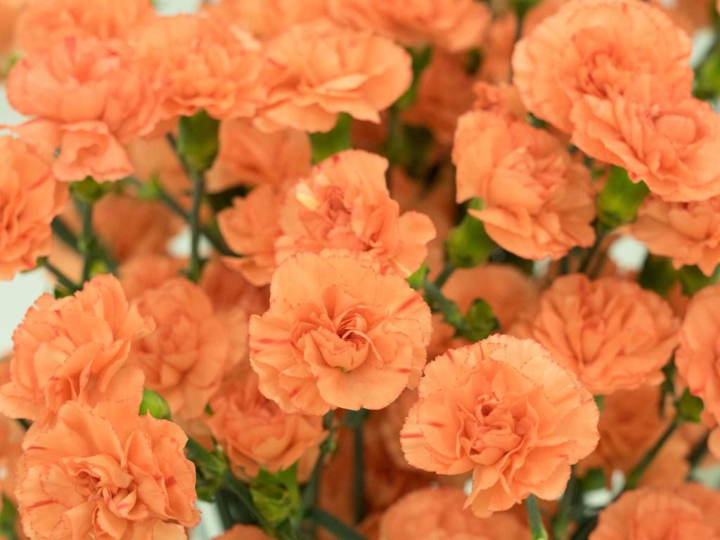30 flores alaranjadas para esquentar seu coração thespruce 26 Vision Art NEWS