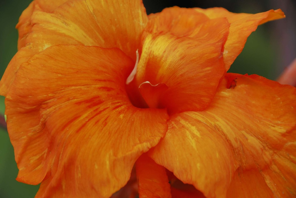 30 flores alaranjadas para esquentar seu coração thespruce 29 Vision Art NEWS
