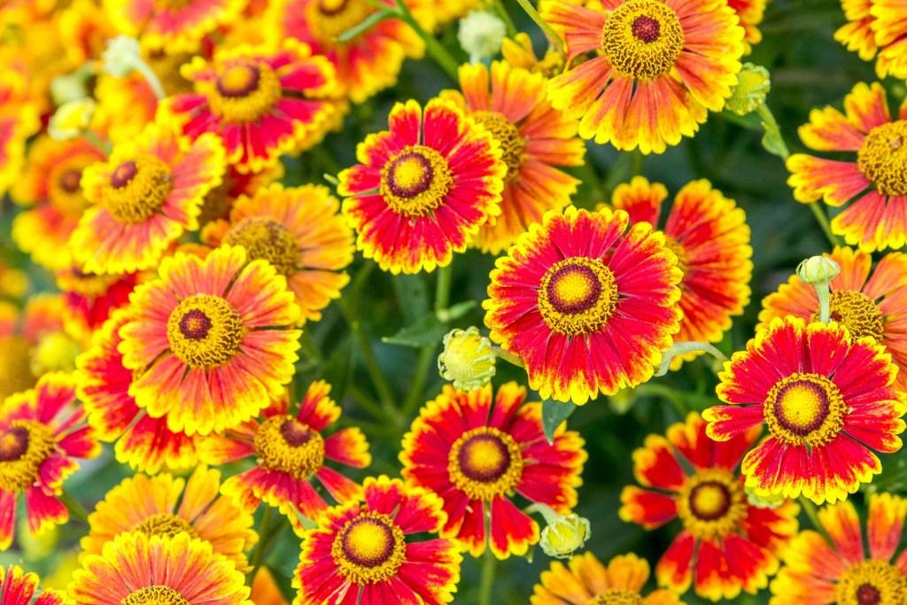 30 flores alaranjadas para esquentar seu coração thespruce 30 Vision Art NEWS