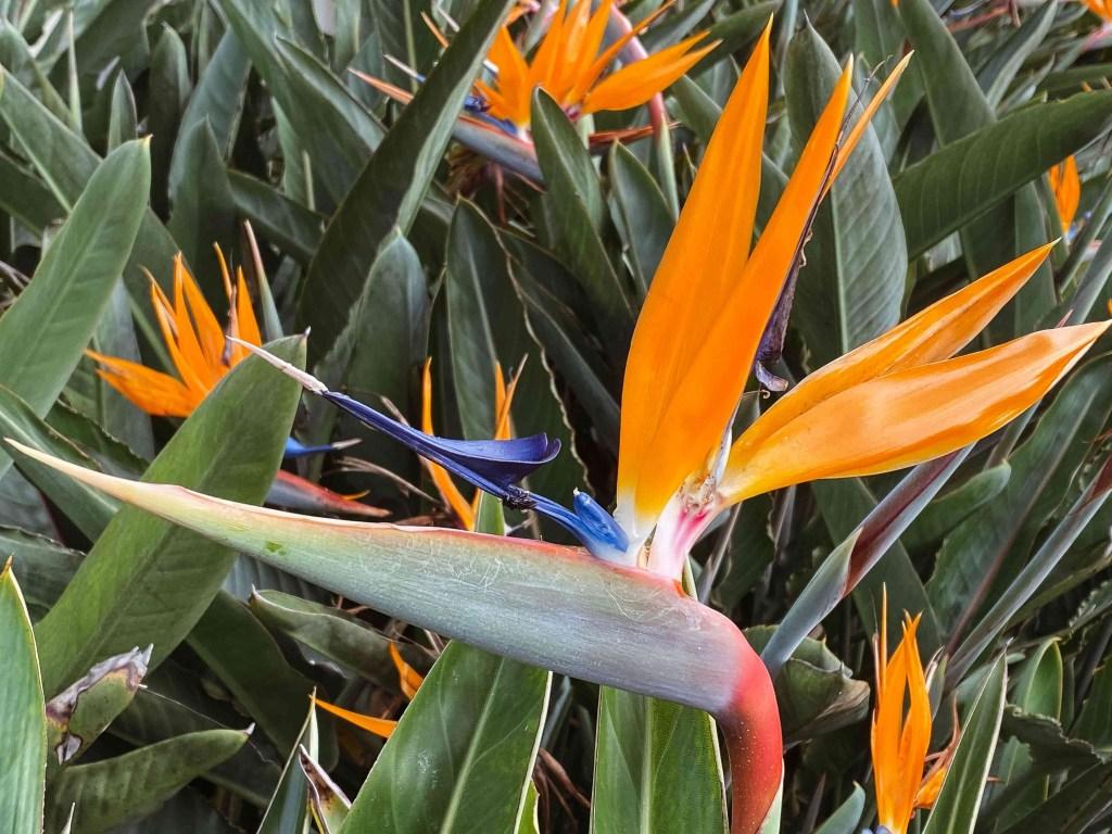 30 flores alaranjadas para esquentar seu coração thespruce 31 Vision Art NEWS