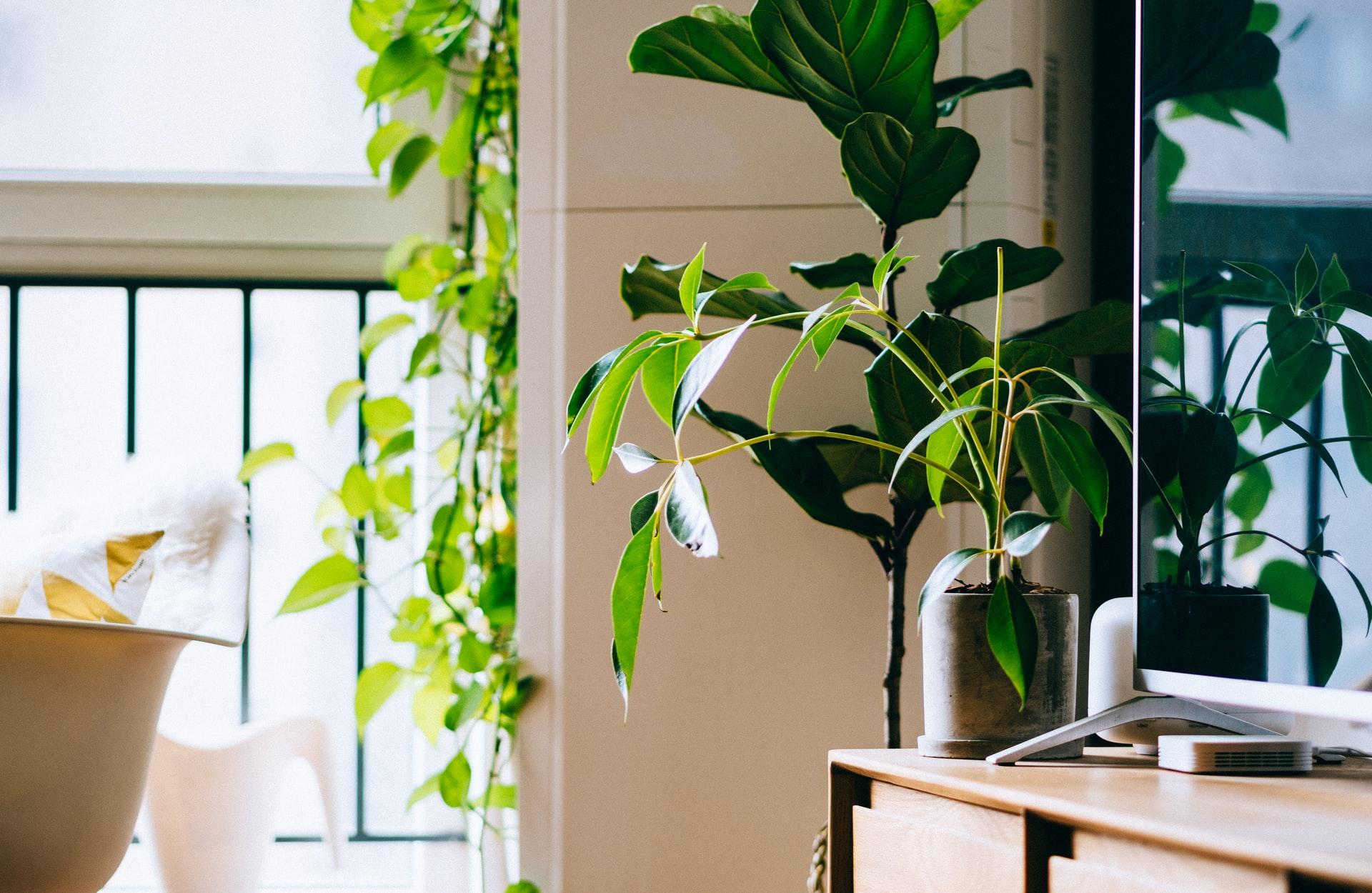 Feng Shui: como incluir plantas na sua casa seguindo a prática